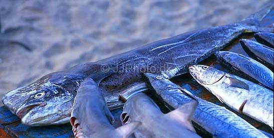 sværdfisk på engelsk