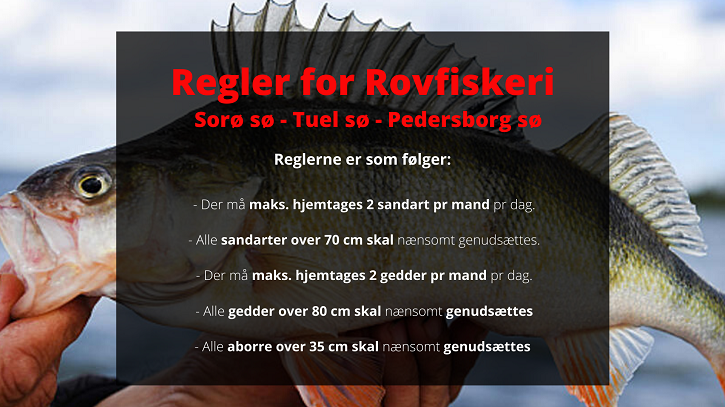Regler for Rovfiskeri